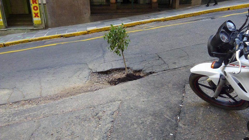 Moradores aproveitam buraco de meses e plantam uma árvore no meio da rua da Ladeira