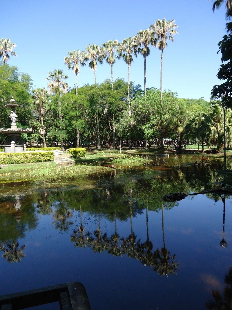 Prefeitura mantém criadouro de aedes aegypti em pleno Parque da Redenção