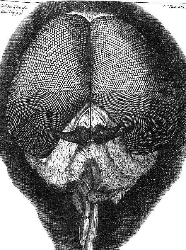 O papel mata-moscas, parábola de Robert Musil