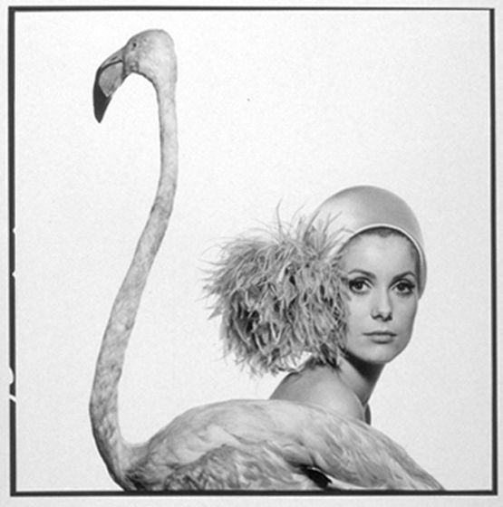 catherine deveuve by david bailey january 1968