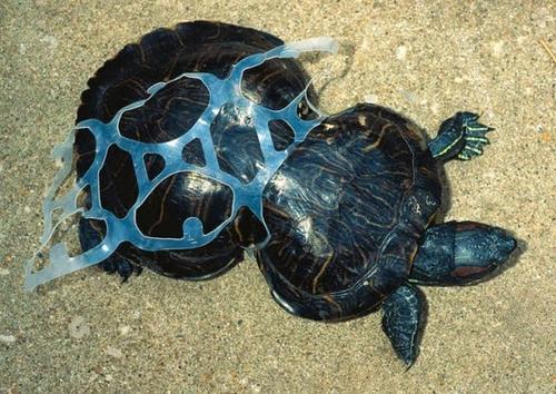 O impacto verdadeiramente terrível da poluição na Terra